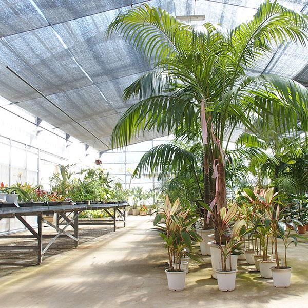温室で熱帯植物鑑賞<br /> えこ・あぐりまーと