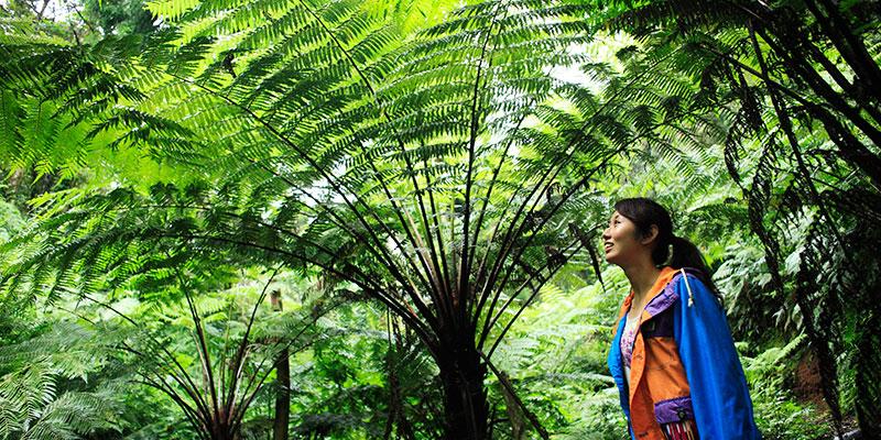 太古の地球を思わせる「ヘゴの森」を歩く