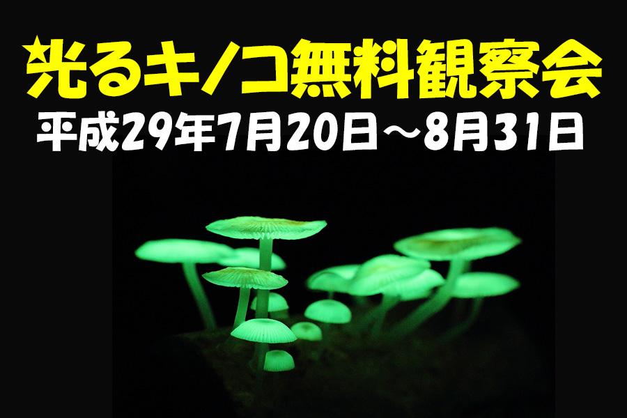 平成29年度光るキノコ無料観察会 7月20日(木) ~ 8月31日(木)