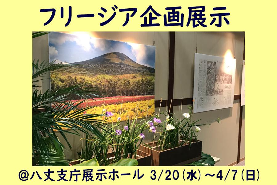 フリージア関連企画展示 (3月20日~4月7日)