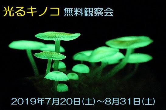 光るキノコ無料観察会 7/20(土)~8/31(土)