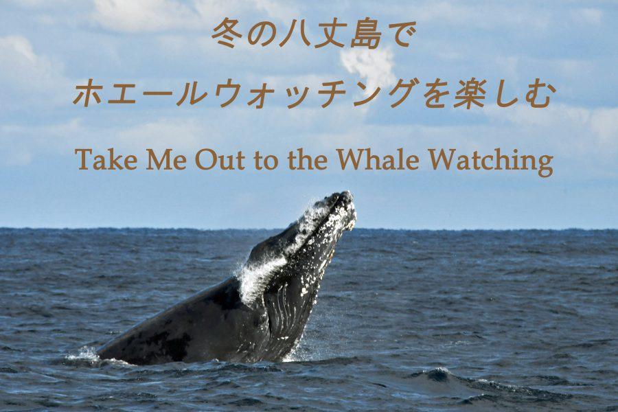 八丈島でザトウクジラのホエールウォッチング