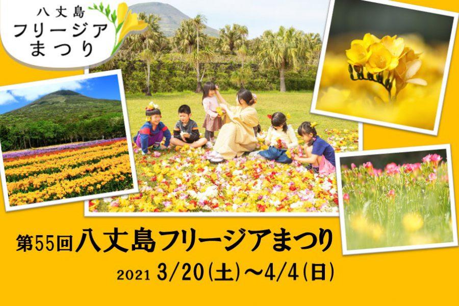 第55回八丈島フリージアまつり 3/20(土)~4/4(日)